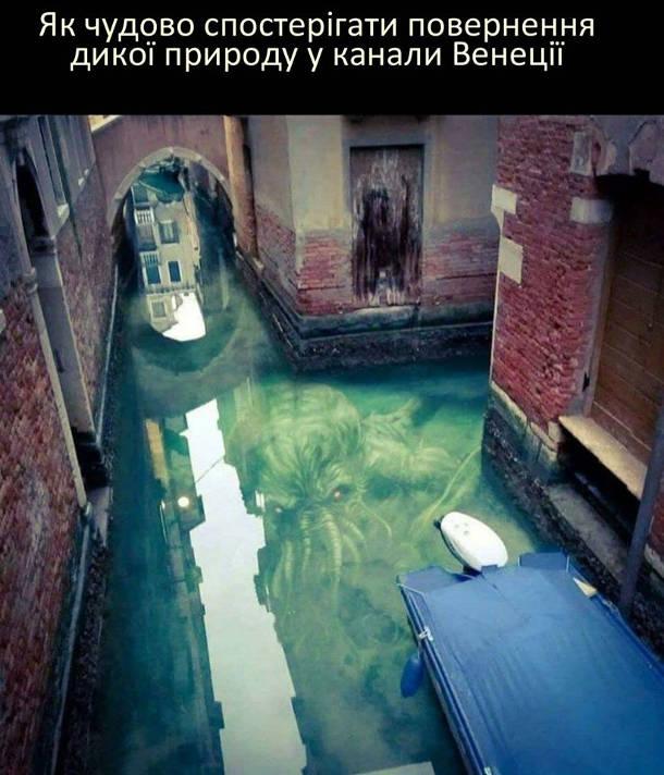 Як чудово спостерігати повернення дикої природи у канали Венеції