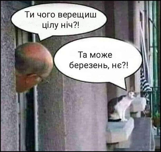 Мем Кіт навесні. Чоловік виглядає з вікна і кричить до кота: - Ти чого верещиш цілу ніч?! Кіт: - Та може березень, нє?!