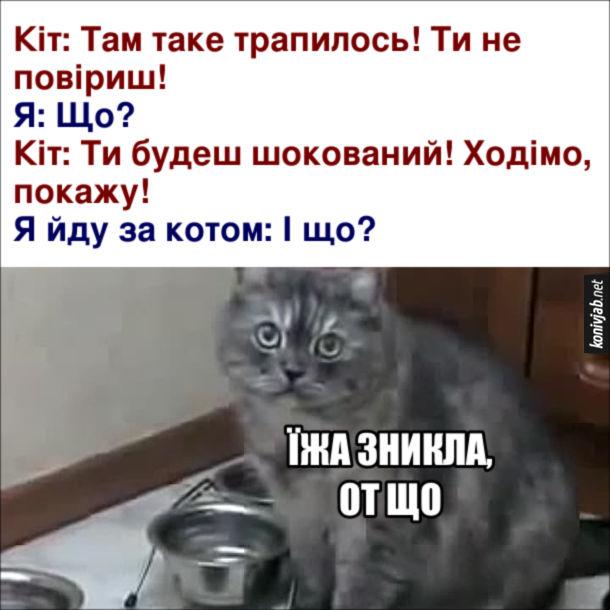 Прикол Кіт веде до порожньої миски. Кіт: Там таке трапилось! Ти не повіриш! Я: Що? Кіт: Ти будеш шокований! Ходімо, покажу! Я йду за котом: І що? Кіт: Їжа зникла, от що