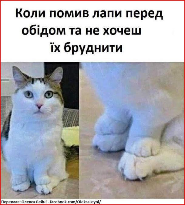 Смішне фото Котячі лапки. Коли помив лапи перед обідом та не хочеш їх бруднити. Кіт поклав свої передні лапи на задні лапи і так сидить