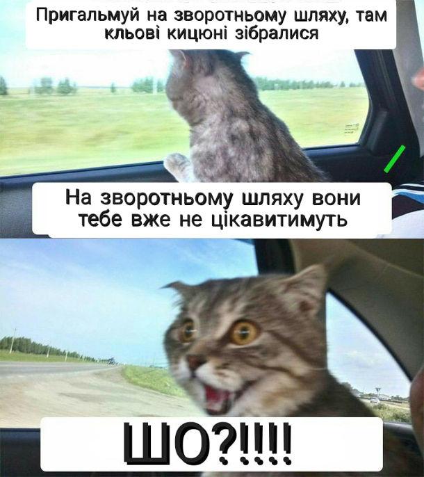 Прикол Кота везуть на кастрацію. Кіт їде з господарем в машині. Кіт: Пригальмуй на зворотньому шляху, там кльові кицюні зібралися. Господар: На зворотньому шляху вони тебе вже не цікавитимуть. Кіт: Шо?!!!!