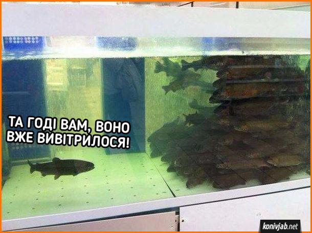 Прикол в акваріумі. Одна рибина в одному кутку акваріуму, а всі інші  згрудилися в іншому кутку. Ця рибина: Та годі вам, воно вже вивітрилося!