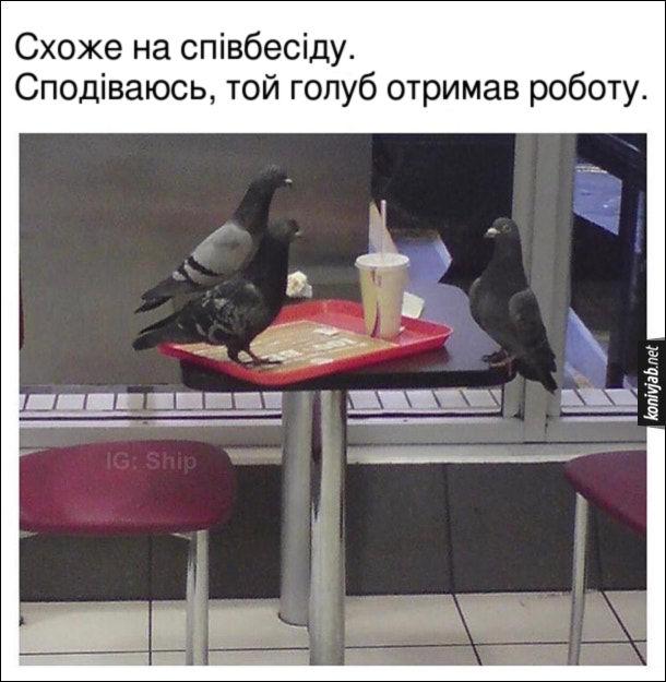 Жарт про голубів. В фаст-фуді на порожньому столі стоїть піднос із залишками їжі. На столі сидять три голуби - двоє з одного краю стола, а третій - з іншого краю. Схоже на співбесіду. Сподіваюсь, той голуб отримав роботу