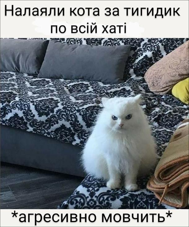 Смішна фотка Злий кіт. Налаяли кота за тигидик по всій хаті. Кіт агресивно мовчить