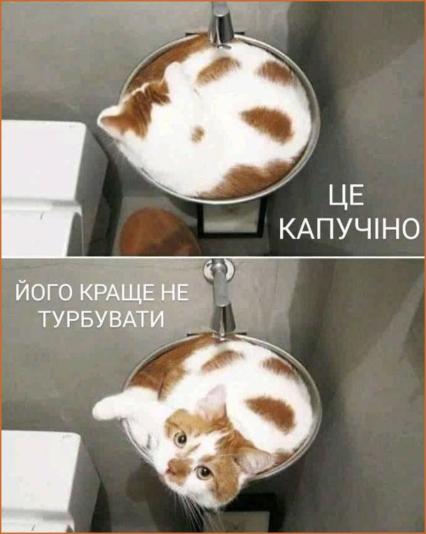 Прикол Кіт схожий на капучіно. Це капучіно, його краще не турбувати