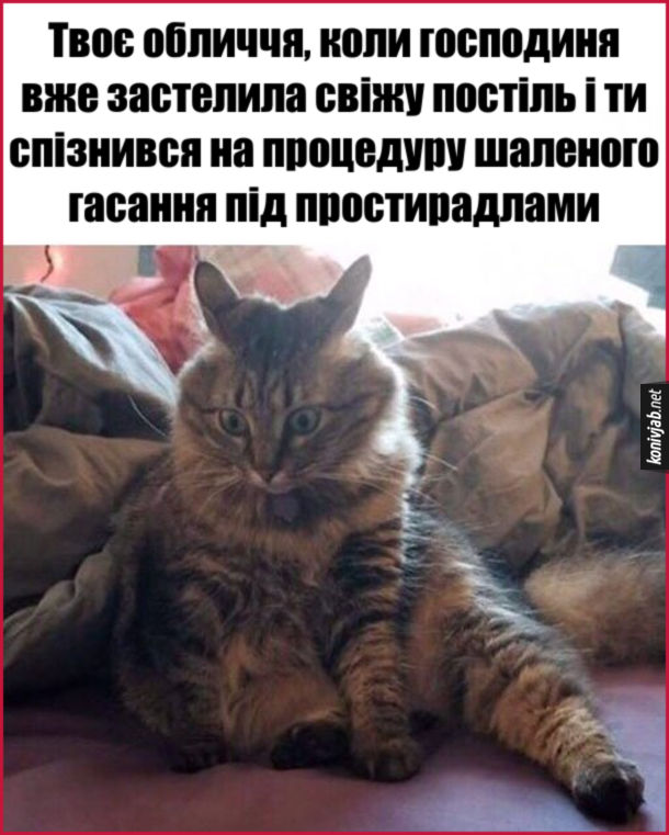 Мем Кіт облом. Твоє обличчя, коли господиня вже застелила свіжу постіль і ти спізнився на процедуру шаленого гасання під простирадлами