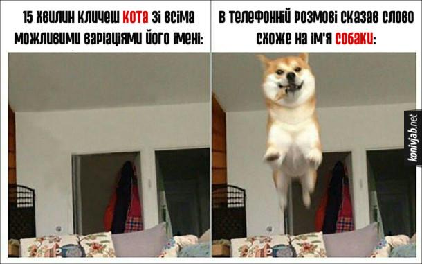 Прикол Різниця між котом і собакою. 15 хвилин кличеш кота зі всіма можливими варіаціями його імені: нуль реакції. В телефонній розмові сказав слово схоже на ім'я собаки: собака радісно біжить до мене