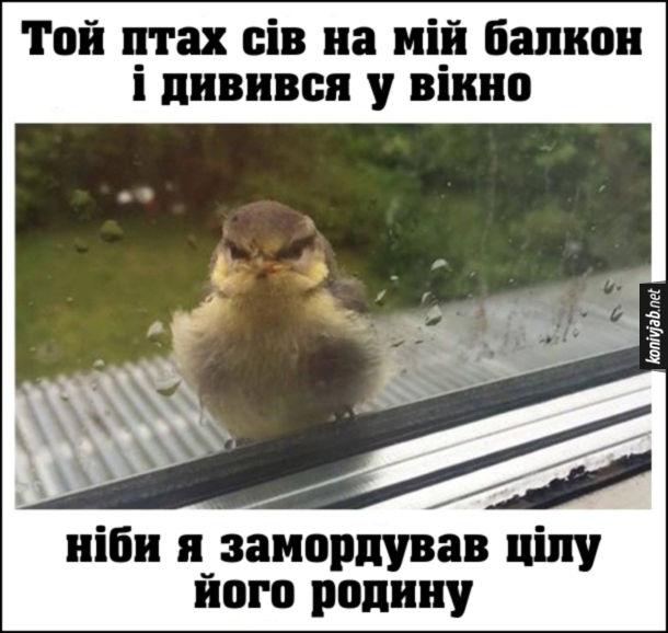 Прикол Люте пташеня. Той птах сів на мій балкон і дивився у вікно ніби я замордував цілу його родину