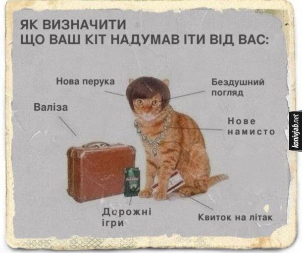 Як визначити, що ваш кіт надумав іти від вас: нова перука; бездушний погляд; валіза; нове намисто; дорожні ігри; квиток на літак