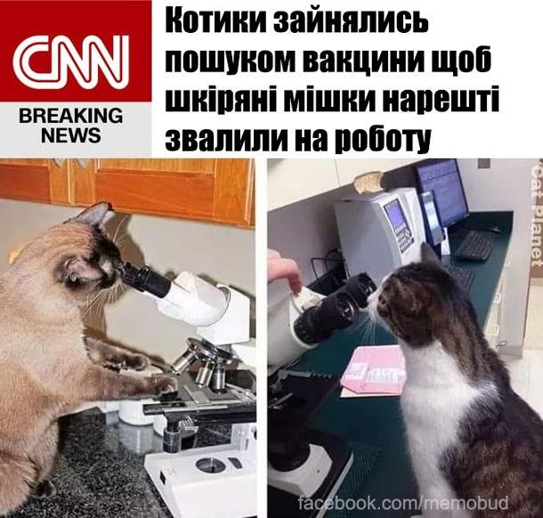 Котики зайнялись пошуком вакцини щоб шкіряні мішки нарешті звалили на роботу