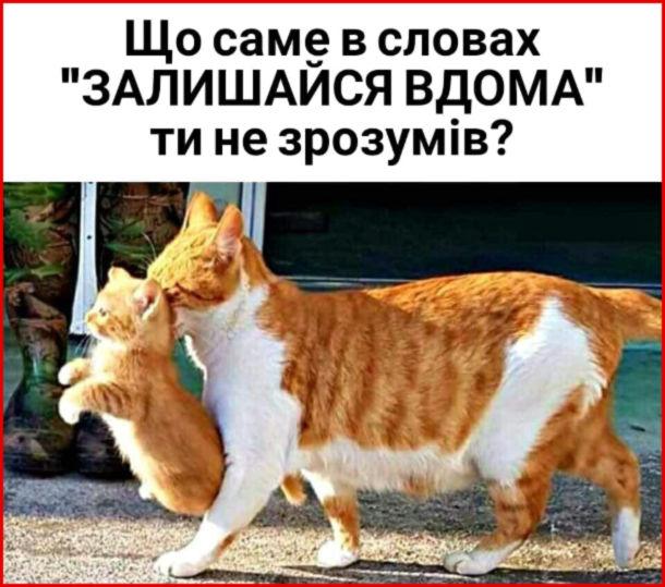 """Кішка тягне кошеня за шкірку. - Що саме в словах """"Залишайся вдома"""" ти не зрозумів?"""