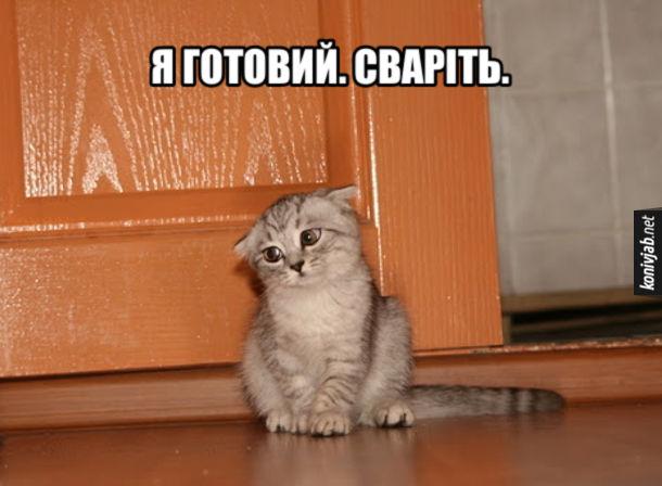 Смішне кошеня. Я готовий. Сваріть.