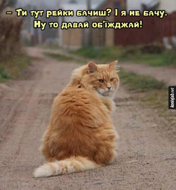 Прикол Кіт посеред дороги сидить: - Ти тут рейки бачиш? І я не бачу. Ну то давай об'їжджай!