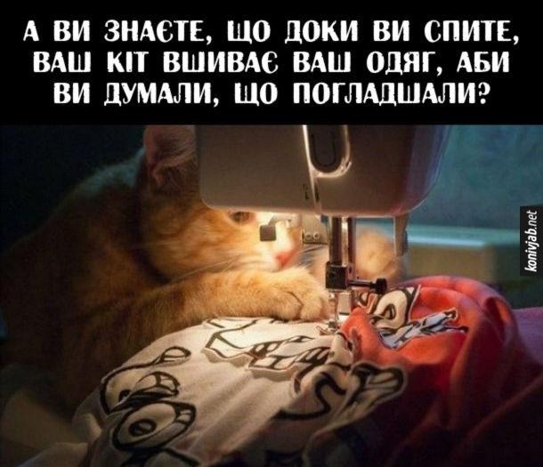 Прикол Підступний кіт. А ви знаєте, що доки ви спите, ваш кіт вшиває ваш одяг, аби ви думали, що погладшали?