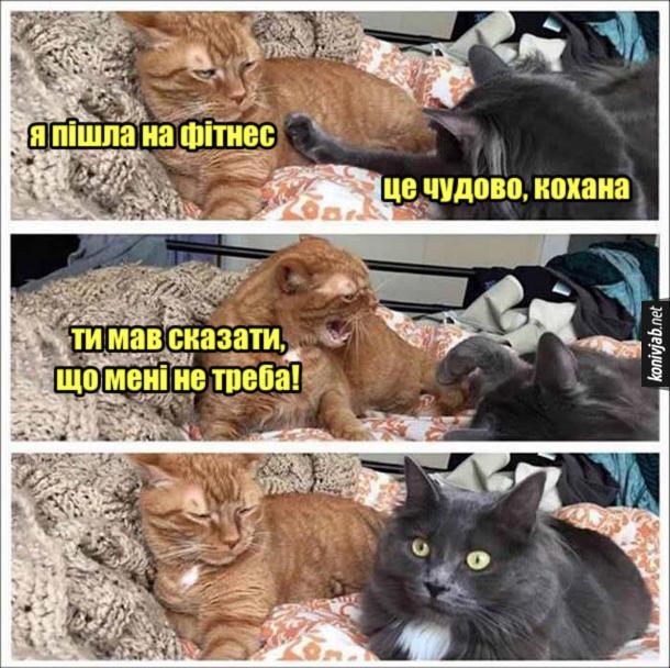 Прикол Кіт і кішка. Кішка: - Я пішла на фітнес. Кіт: - Це чудово, кохана. Кішка: - Ти мав сказати, що мені не треба!