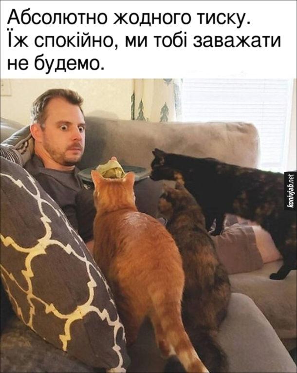Прикол Коти дивляться як господар їсть. Абсолютно жодного тиску. Їж спокійно, ми тобі заважати не будемо.