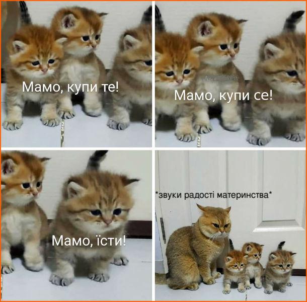 Смішна фотка Кішка і кошенята. Кошенята: - Мамо, купи те! Мамо купи се! Мамо, їсти! Кішка: *звуки радості материнства*