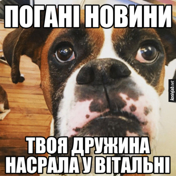 Мем Собака Погані новини. Твоя дружина насрала у вітальні