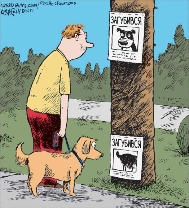 Смішний малюнок Оголошення Загубився собака. Для людей - фото морди, для собак - дупа