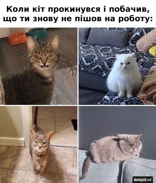 Коли кіт прокинувся і побачив, що ти знову не пішов на роботу
