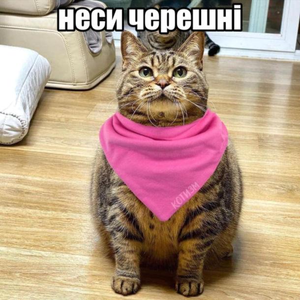 Мем Черешні. Кіт в слинявчику - Неси черешні