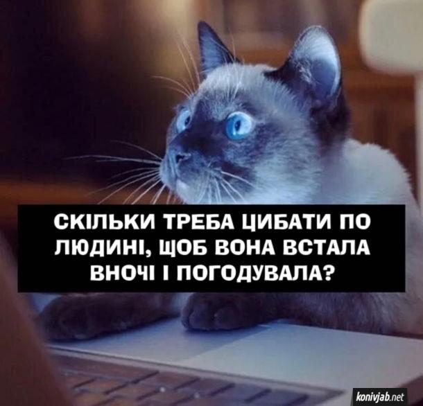 """Кіт шукає в інтернеті: """"Скільки треба цибати по людині, щоб вона встала вночі і погодувала?"""