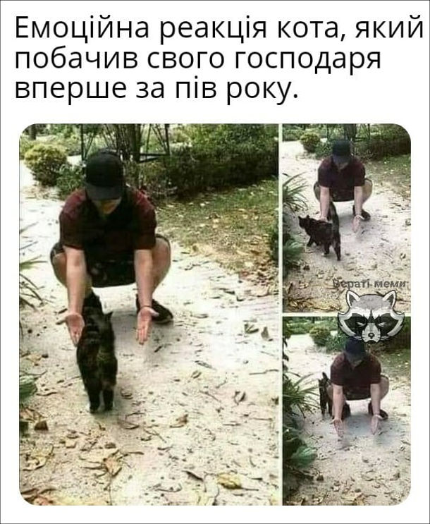 Прикол Кіт без емоцій. Емоційна реакція кота, який побачив свого господаря вперше за пів року.