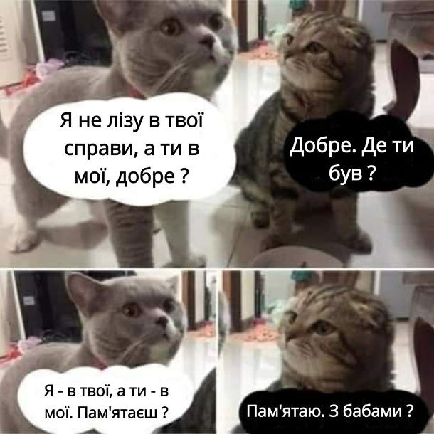 Прикол Кіт і Ревнива кішка. - Я не лізу в свої справи, а ти в мої, добре? - Добре. Де ти був? - Я - в твої, а ти - в мої. Пам'ятаєш? - Пам'ятаю. З бабами?