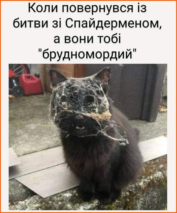 """Смішна фотка Кіт в павутинні. Коли повернувся із битви зі Спайдерменом, а вони тобі """"брудномордий"""""""