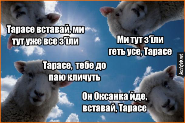 Мем Тарас пасе ягнят. Вівці: - Тарасе вставай, ми тут уже все з'їли. - Ми тут з'їли геть усе, Тарасе. - Тарасе,  тебе до паю кличуть. - Он Оксанка йде, вставай, Тарасе