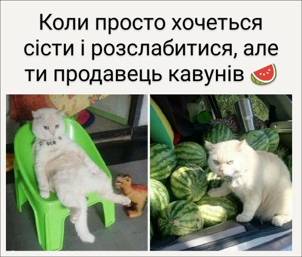 Прикол Кіт продає кавуни. Коли просто хочеться сісти і розслабитися, але ти продавець кавунів