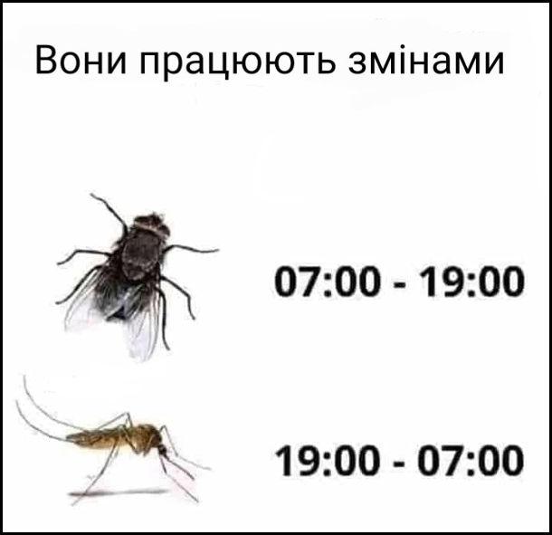 Прикол Мухи і комарі. Вони працюють змінами Мухи 07:00 - 19:00. Комарі 19:00 - 07:00