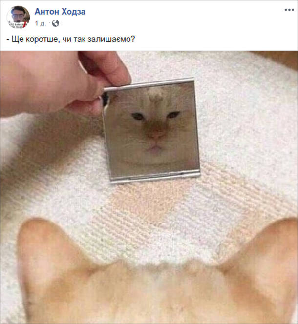 Прикол Кіт дивиться в люстерко. - Ще коротше, чи так залишимо?