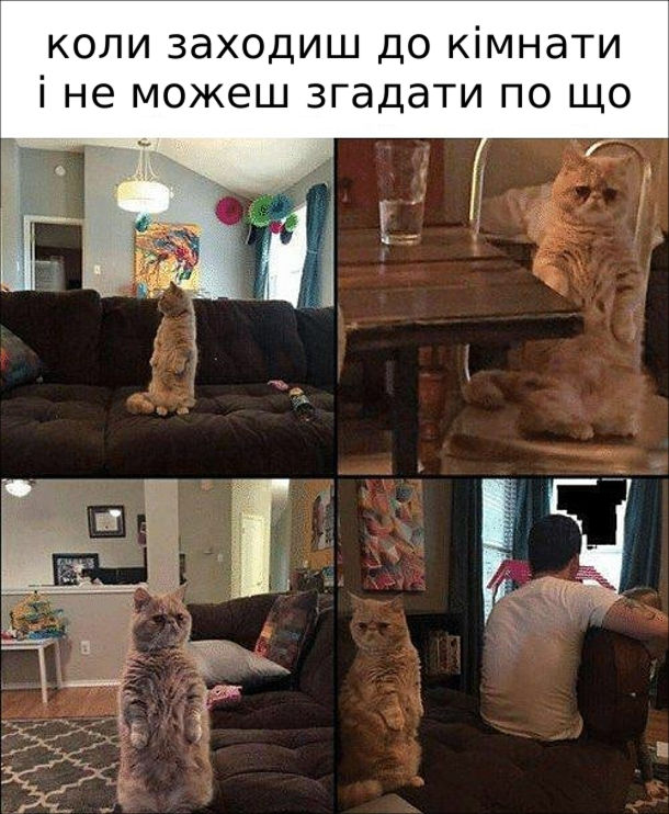 Мем Короткошерстий кіт. Коли заходиш до кімнати і не можеш згадати по що