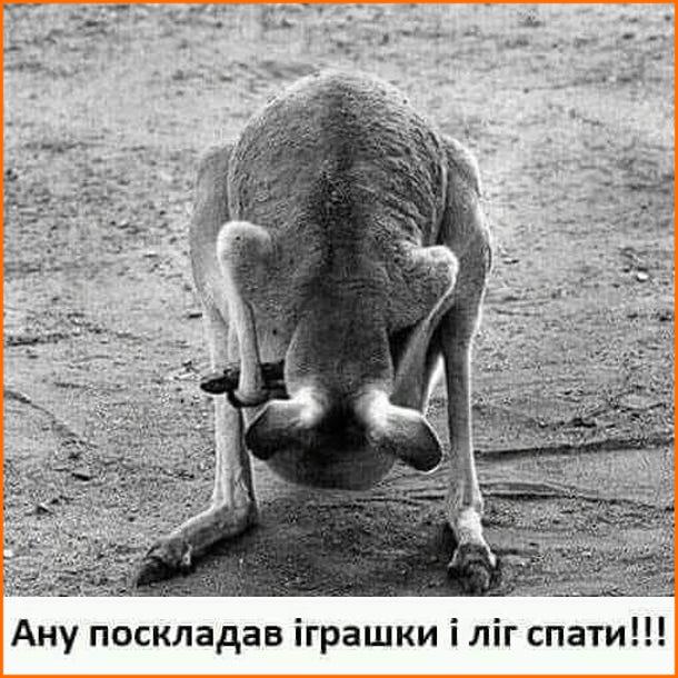 Смішний малюнок Кенгуру заглядає собі в сумку і кричить до кенгуряти: - Ану поскладав іграшки і ліг спати!!!