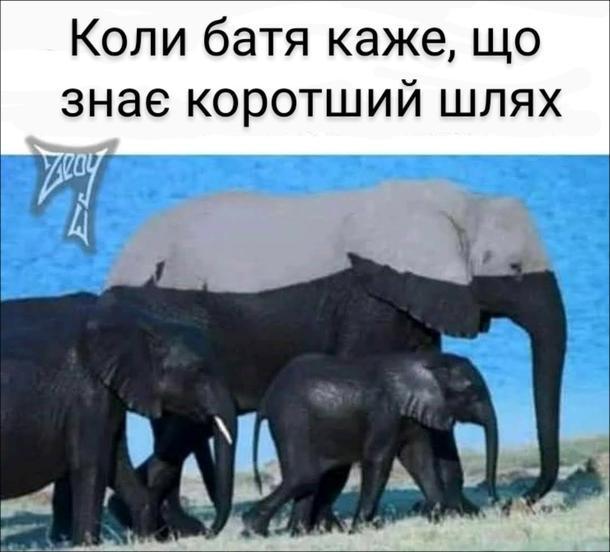 Смішна фотка про слонів, що переходили річку. Коли батя каже, що знає коротший шлях