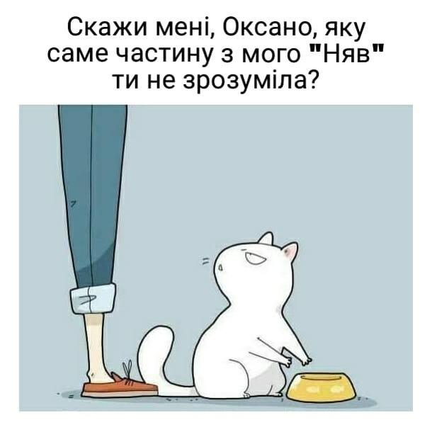 """Смішний малюнок про кота і господиню. Кіт, показуючи на порожню миску: - Скажи мені, Оксано, яку саме частину мого """"Няв"""" ти не зрозуміла?"""