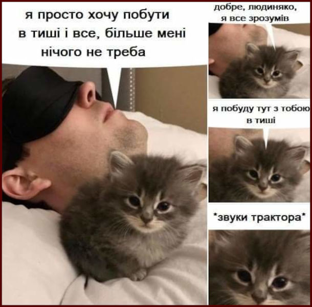Мем про кошеня що муркоче. Чоловік лежить в ліжку: - Я просто хочу побути в тиші і все, більше мені нічого не треба. Кошеня: - Добре, людиняко, я все зрозумів, я побуду тут з тобою в тиші (муркоче ніби звуки трактора)