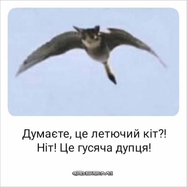 Оптична ілюзія Гусак. Думаєте, це летючий кіт?! Ніт! Це гусяча дупця!