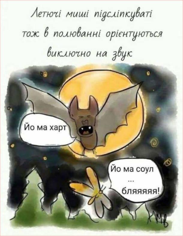 Смішний малюнок про кажанів. Летючі миші підсліпкуваті, тож в полюванні орієнтуються виключно на звук. Кажан: - Йо май харт. Метелик: - Йо май соул... бляяяяя!