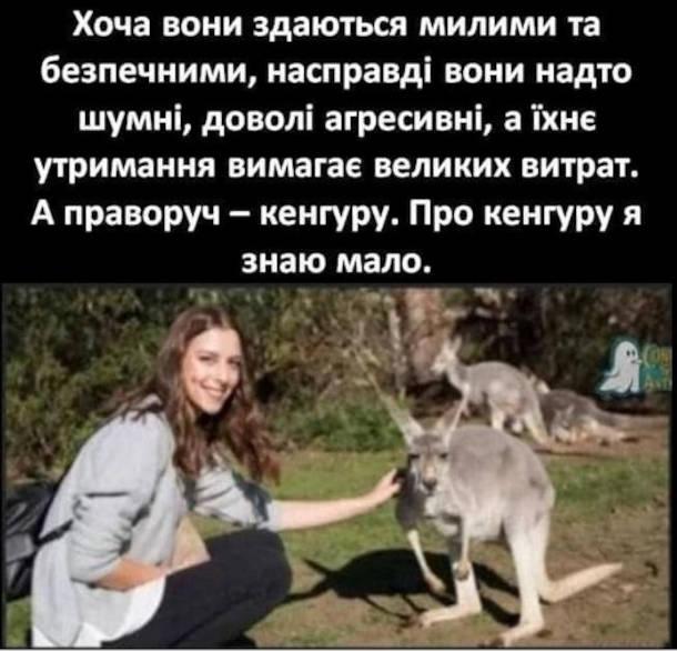 Мем про кенгуру. Хоча вона здаються милими та безпечними, насправді вони надто шумні, доволі агресивні, а їхнє утримання вимагає великих витрат. А праворуч - кенгуру. Про кенгуру я знаю мало.