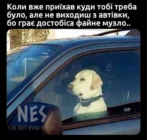 Мем собака за кермом. Коли вже приїхав куди тобі треба було, але не виходиш з автівки, бо грає достобіса файне музло..