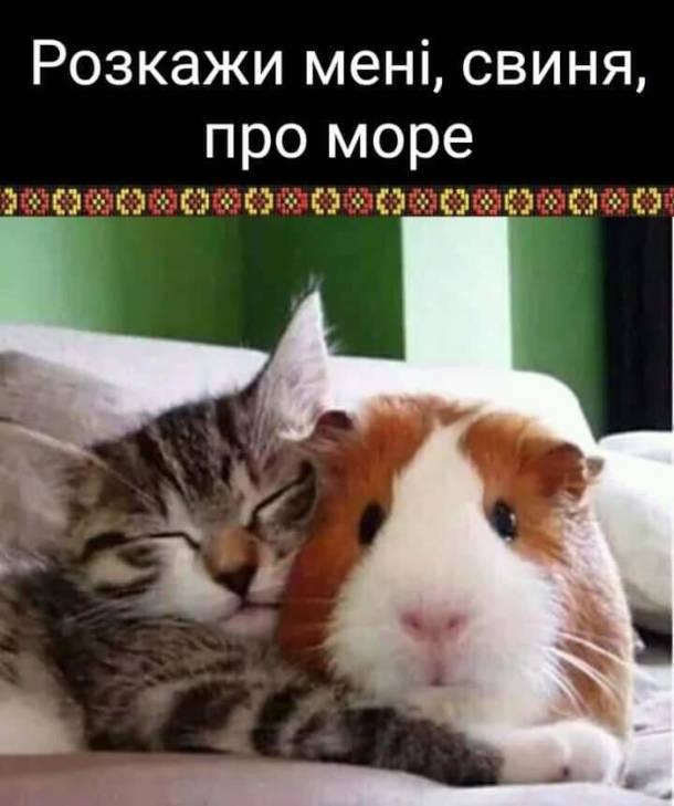 Прикол кіт і морська свинка. Кітдо морської свинки: - Розкажи мені, свиня, про море