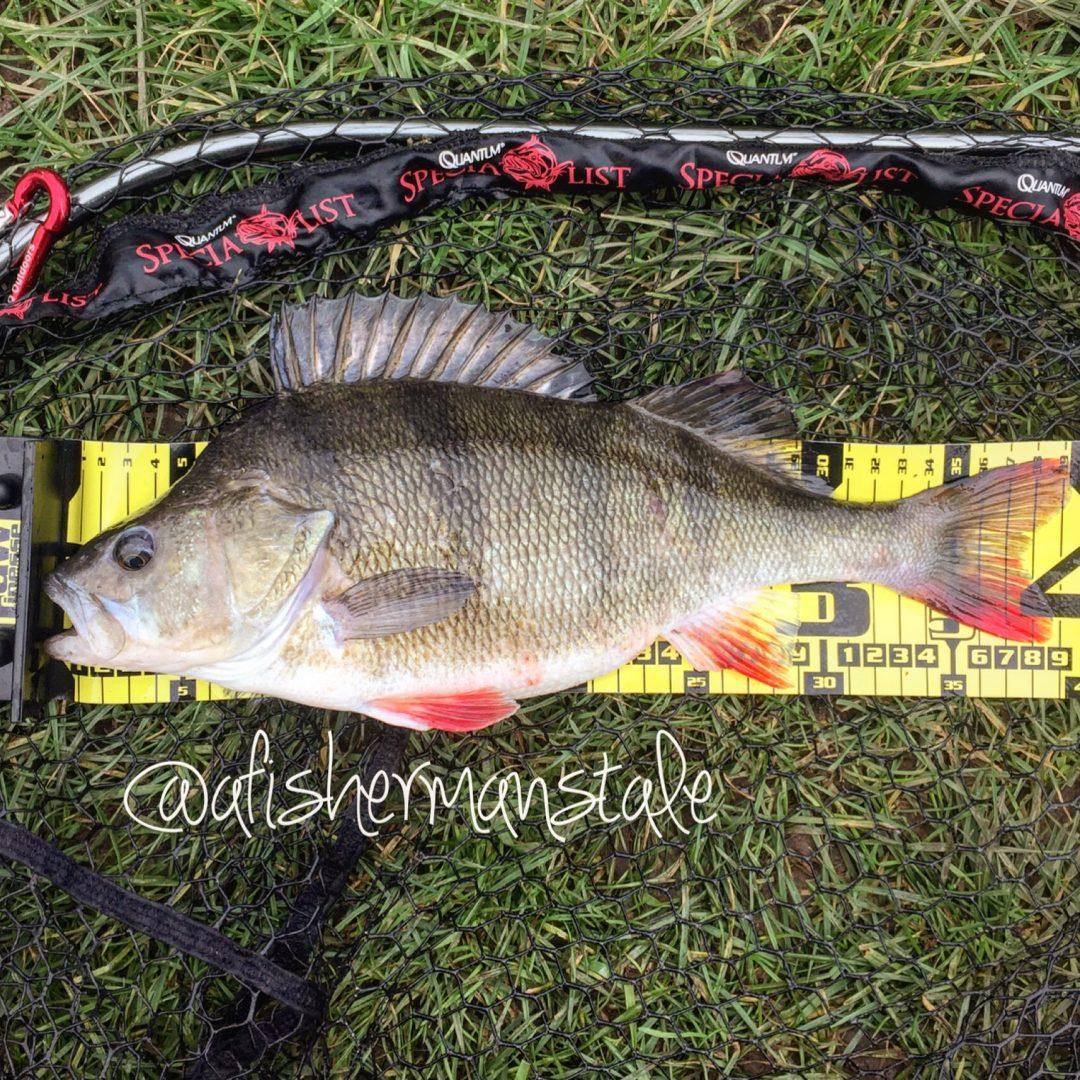 Perch Fishing Feb 2016 -37 cm Canal Perch