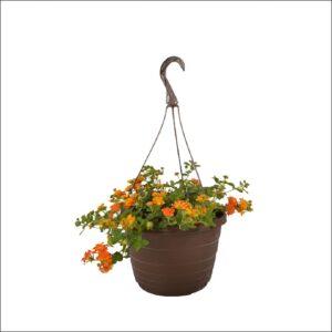 Yoidentity Lantana Plant in Hanging Pot