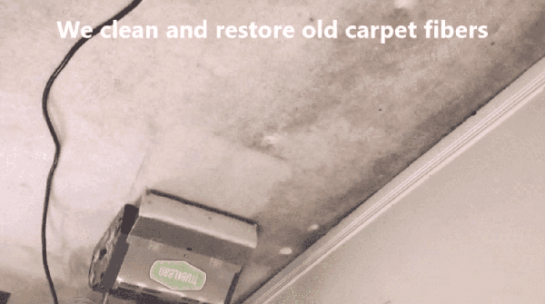 Best Carpet Cleaning Oakville, Mississauga, Brampton