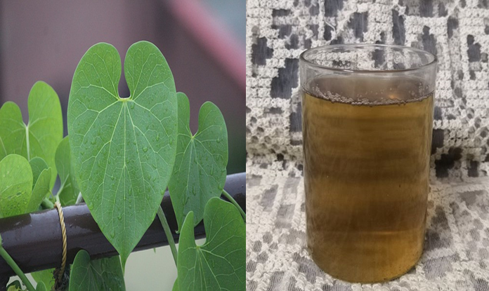 Home Made Flavorsome Giloy Syrup for Immunity