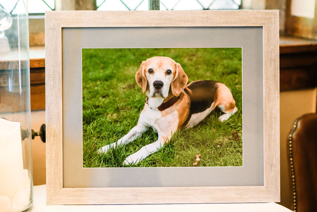 Photo of a bride & groom's beagle on the memories table for their spring wedding at West Tower