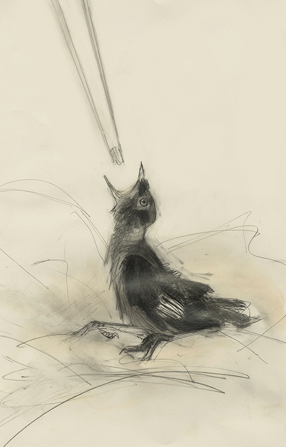 My story of a tame Jackdaw