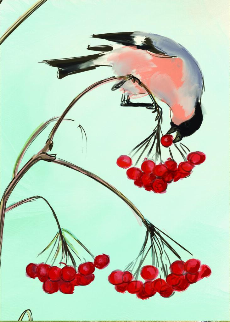 The Bullfinch Pyrrhula pyrrhula